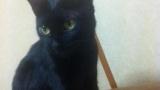 【画像有】猫のお出迎えとか可愛すぎるだろ!!