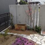 『芝桜』の画像