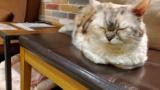 ワイ、猫カフェで癒される(※画像あり)