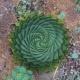 自然は不思議に溢れていた!植物が織りなす数学的な幾何学模様が美しい21枚の画像