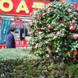 『OAランドに花が咲く』の画像