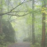 『雨の中の散歩』の画像