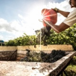 『イタリア・マルケ州ワイン生産者のZoomオンラインセミナー開催』の画像
