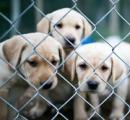 北朝鮮でイヌを飼うことが流行中 イヌを飼えるほど生活に余裕があるというのが一種のステータスに