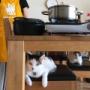 kedarake 猫のいる料理教室 * yo-yo-'s kitchen 10月