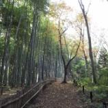 『11月の東大和の公園』の画像