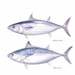 4色ボールペンde魚の絵 by T.Murata