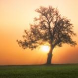 『【自然ってスゴイ】太古には数万メートルの樹が生えていた?!』の画像