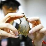 【動画】中国、プラスチックで作られたニセ海苔が流通?ネットで動画拡散し物議 [海外]