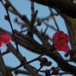 『1月の花と富士山』の画像