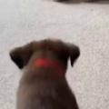 子イヌの目の前に大きな「ぬいぐるみ」があった。くらえぇ! → 子犬ミサイルはこうなります…