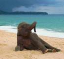 初めて海を見てテンション上がりすぎるゾウ