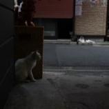 『代田橋 沖縄タウン #3』の画像