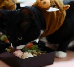 【特別編】 ダート重・不良の猫 【2021】
