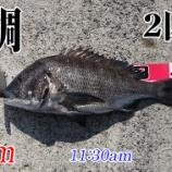 『見えチヌ釣れた!山口県柳井市の黒鯛(チヌ)釣り #040』の画像