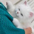 猫飼ったら1回は引っかかれる?