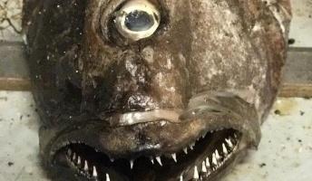 """【画像】漁師が深海から引き上げた""""奇妙な生物たち""""がこちらwwwwwwwwwww"""