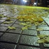 『落ち葉をえ踏みしめて』の画像