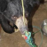 『Be the change:救出されたクマ』の画像