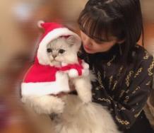 『【カントリー・ガールズ】小関家のクリスマスに謎の人物「長野さん」が現れる』の画像