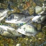 『秋の釣り ルアーで黒鯛』の画像