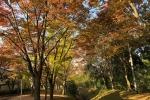 紅葉がめっちゃ進んでてそれはもう絵画のよう〜星田妙見宮、妙見の桜並木のところ〜