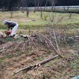 『伐採やハクビシン』の画像