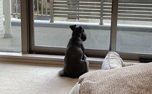 背中に「貫禄あり過ぎ」な犬