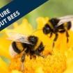 BBC 20200910 ミツバチのいない未来はあるのだろうか?