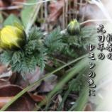 『レモンの色に』の画像