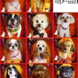 『2013-10-10のわんちゃん達』の画像
