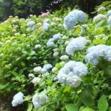 『紫陽花・*:..。o○☆神戸市立森林植物園へ』の画像