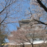 『【北九州】お花見』の画像
