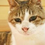 猫ちゃんのトイレ日記  お役立ち情報
