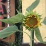 季節は紫陽花から夏の花に