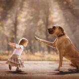 『大きな犬と小さな子供たち』の画像