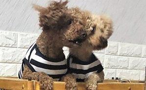 犬の服を新調 何かに似ている…
