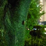 『季節【2834日目】』の画像