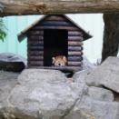 秋晴れの動物園