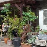 『戸田市・市役所南通りで「朝市 in 上戸田」開催されました』の画像