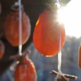 『干し柿、輝く』の画像