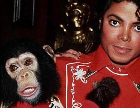 故マイケル・ジャクソン、チンパンジーのバブルス君を虐待!