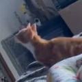 【ネコ】 天井のシーリングファンを止めてみた。猫は初めて、動いていないそれを見た → こうなった…