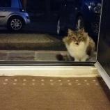 『直感と判断:家に入りたがった野良猫』の画像