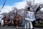 桜が満開!星田妙見宮の桜並木と稚児行列!【情報提供:いりこ猫さん】