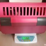 『てぃいだの体重測定しましたっ☆』の画像