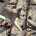 【子ネコ】 お父さんが「屋根の上」で作業をしていた。お前は邪魔だから下にいなさい → 子猫、断る! 【ハシゴ】