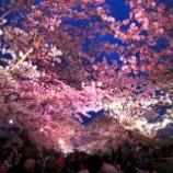 『いよいよ夜桜がスタート!!』の画像