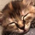 子ネコが私の肩の端っこで眠りそう。でもちょっと落ち着かないようだ → こうなる…
