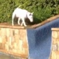 イヌが庭の隅を歩いていた。その先には「ウォータースライダー」がある → 犬はこうなっちゃう…